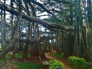 Big_Banyan_Tree_at_Bangalore