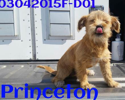 Princeton wants to be your best friend!