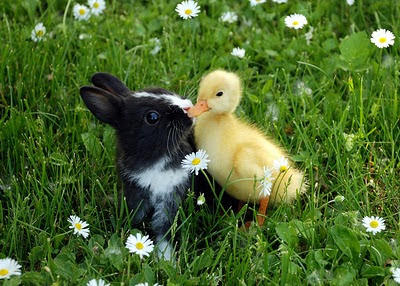 bunny+and+duckling