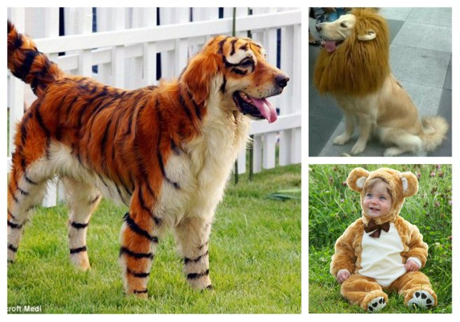 Lions and Tigers and Bears... It's Halloween!  Memee's Musings