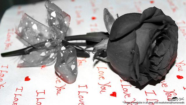 Escalation - Love Dies. | Memee's Musings